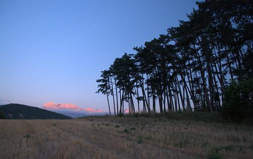Rideau de pins sylvestres et Obiou au coucher de soleil