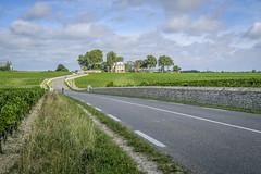 Médoc road (fred9210) Tags: road médoc aquitaine france chateaux pauillac wine bordeaux vignes light