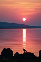 (zedspics) Tags: balaton hungary hongarije magyarország ungarn plattensee sunrise nature zedspics 1908