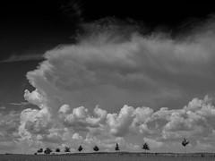 Summerday (I) - Clouds (Maximilian Busl) Tags: bayern deutschland töpen trees sky blackandwhite clouds landscape dramatic hasselblad 500cm cfv50c