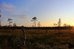Morass (Irmzaq photography) Tags: jämtland fjäll myr morass mire sweden nature naturephotography photography sunset sunsetphotography