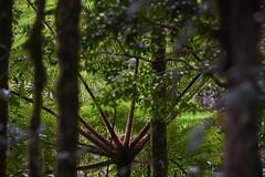 . (arcibald) Tags: arfak papua barat indonesia flora forest fern