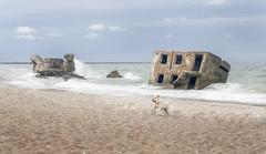 Karosta (Vaida Vir.) Tags: beach sea house abandoned sky sand dog pets animals waves outdoors travel