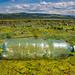 Plastikflasche treibt auf der Wasseroberfläche der Donau. Gewässerverschmutzung