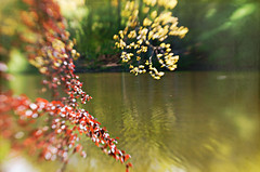 Sway! (Elisafox22) Tags: elisafox22 sony nex6 lensbaby composerpro 50mm optic doubleglass trees hbw bokehwednesday tree loch water reflections bokeh spring outdoors fyvie fyviecastle fyvieloch aberdeenshire scotland elisaliddell©2019