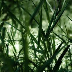 Forest Grass 030 (noahbw) Tags: d5000 dof nikon prairiewolfsloughforestpreserve abstract blur depthoffield forest grass landscape light natural noahbw quiet shadow square still stillness summer woods