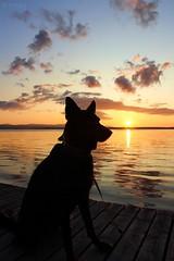 sunset 09 (Irmzaq photography) Tags: sunset sunsetphotography photography nature naturephotography sun sky clouds lake dog dogphotography