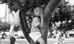 a boy in a tree (steve: they can't all be zingers!!! (primus)) Tags: contaxrts carlzeisstplanar50mmf14 kodak400tmax expired primelens prime primecarlzeiss monochrome bw blackwhite blackwhitephotos