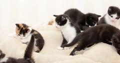 What happens when you try to get 8 kittens in the same photo 😂 (Ranveig Marie Photography) Tags: dnnj dyrebeskyttelsen kittens cats katter kattunger cute 8 eight litter pet kjæledyr pets animalprotection adoptsontshop katt cat animals husdyr