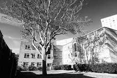 Shadow Land (esallen52) Tags: tree light sunlight shadows city architecture blackwhite buildings