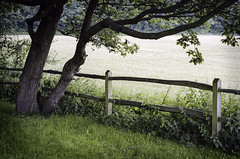 Tree, Fence, and Field (engjoneer) Tags: nikonfm3a 35mm nikon35mmf20afd portra160 fence