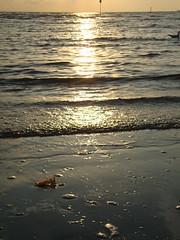 All'Alba Vincerò (ba.sa74) Tags: natura veneto venezia chioggia mare sole alba marea risacca onda alga naturalmente ambiente incontaminata