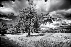 Summer Days... (Ody on the mount) Tags: anlässe bäume em5 felder fototour himmel landschaft mzuiko918 omd olympus pflanzen rahmen schwäbischealb wolken bw blackandwhite clouds frame landscape monochrome sw savingtheclimatebytrees schwarzweis sky tree