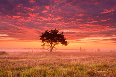 Perfect Start (Ellen van den Doel) Tags: zonsopkomst natuur color nature mist boom kalmthoutseheide kalmthout tree clouds sunrise kleur purple outdoor lucht landschap augustus belgium heide landscape sky fog heather 2019 wolken field antwerpen belgië