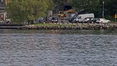 ... nå, ser du sälen? (Franz Airiman) Tags: halichoerusgrypus säl seal sälis sälx grayseal greyseal animal djur stockholm sweden scandinavia wild vild vattendjur mammal watermammal däggdjur vattendäggdjur gråsäl nackastrand saltsjön