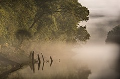 Cumberland (somewheredowntheroadphoto) Tags: river morning light shadow sahdows fog foggy water reflection reflections trees warm summer winding
