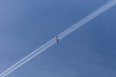 a340 Bird & Vapour Trail (ImpatientlyJ) Tags: bird sky vapour trail plane flying blue high up above wings