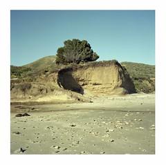 Erosion curve with heron (ADMurr) Tags: california coastal geology erosion curve heron rolleiflex 35e zeiss planar kodak portra 400 dbb057