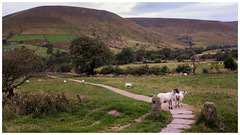 Edale, Peak District (S.R.Murphy) Tags: edale landscape peakdistrict sept2019 fujifilmx100t nature evening eveninglight uk greatbritain england naturallight sheep animals farm farmhouse farming countryside