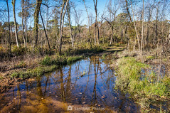 ¿Por dónde paso? (SantiMB.Photos) Tags: 2blog 2tumblr 2ig invierno winter tordera maresme bosque forest agua water charca pond geo:lat=4171547033 geo:lon=272285033 geotagged cataluna españa