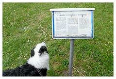 That's very interesting, Leo (leo.roos) Tags: reis hond tekst zweed borcol solaag sweden sverige gotland zweden darosa leoroos a7rii sony241054 sonyfe24105mmf4goss sel24105g swedengotlandspring2019 dog pet text bordercollie information brody lojstahall