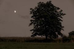 Der Mond und der Baum (markusgeisse) Tags: mond baum moon tree night nacht landschaft landscape nature natur bw old style