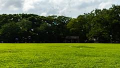 bubbles (karwinho) Tags: bubble soap sphere ball park green nature recreation yoyogi yoyogipark tree grass