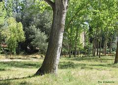 Vía verde de Quel (kirru11) Tags: víaverde árboles chops campo hierba camino hojas quel larioja españa kirru11 anaechebarria canonpowershot