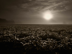 Sunrise Over Soybeans (esfishdoc) Tags: browntone serene yard mist sunrise esva outdoors photography summer soybeans field crops soy clouds virginia panasonic panasonicg9 september 2019 september2019 nature morning