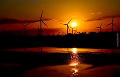 Quarta-sunset (sonia furtado) Tags: quartasunset sunset pds contraluz sol praiadominhoto guamaré rn brasil brazil soniafurtado frenteafrente