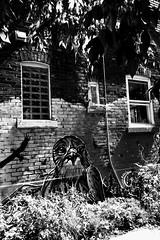 La ruelle... un endroit privilégié pour les artistes... (woltarise) Tags: iphone7 contrastes soleil murdebrique bâtiment oiseaux sauvages animaux streetart rosemontpetitepatrie montréal ruelle