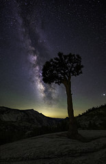 Lone Tree at the Point (Omnitrigger) Tags: sky night milkyway stars galaxy yosemite park nationalpark granite outside nature tree nightsky longexposure core august california sierra 14mm