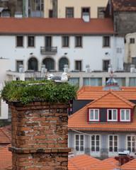 Nesting in Porto (Oleg S .) Tags: animal bird nest architecture chimney seagull porto portugal
