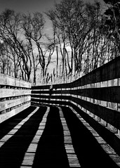 Path to nowhere (mia depaola) Tags: nature abstract perspective lines outside mono