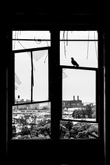 I Will Always Find a Constant and a Comfort In Your Love (Thomas Hawk) Tags: corktown detroit mcs michigan michigancentraldepot michigancentralstation usa unitedstates unitedstatesofamerica abandoned bird bw pigeon silhouette fav10 fav25