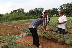 Cambodia-dawson-01 (1192) (Horticulture Innovation Lab) Tags: photobybrendadawson cambodia legrand borarin royaluniversityofagriculture ucdavis karen eggplant