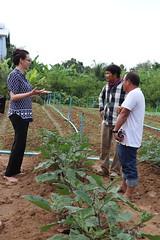 Cambodia-dawson-01 (1197) (Horticulture Innovation Lab) Tags: photobybrendadawson cambodia legrand borarin royaluniversityofagriculture ucdavis karen eggplant