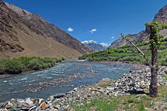 Flowing... (Lopamudra !) Tags: lopamudra lopamudrabarman lopa landscape suru suruvalley valley vale india river water waterscape mountain mountains himalaya himalayas highaltitude highland tree ladakh beauty beautiful picturesque