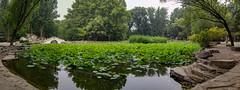 20190604-20190604_092722-Pano (Scaredy Sleepy Kitty) Tags: china beijing beihang university green garden pond park