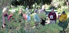 Threatened Species Tours at the Royal Tasmanian Botanical Gardens September 2019 (Royal Tasmanian Botanical Gardens) Tags: threatened species tours guided volunteers september 7th tasmanianseedconservationcentre tasmanianflora conservation christopherlang