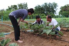 Cambodia-dawson-01 (1225) (Horticulture Innovation Lab) Tags: photobybrendadawson cambodia legrand borarin royaluniversityofagriculture ucdavis karen eggplant