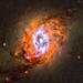 Stellar Feedback in NGC 3351, variant