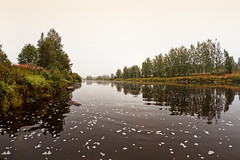 Foggy Morning On The River (k009034) Tags: copyspace europe finland outdoors scandinavia tranquilscene bend flow foam fog grass green landscape leaves mist morning nature nopeople reflection river rural scenic sky summer trees view water waterscape weather