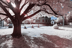 Pink Tree (Christoph Wenzel) Tags: deutschland baum sigma16mmf14dcdn sonyalpha6000 thüringen 720nm stadt park infrarot sommer sonneberg
