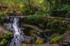 Un rincón en el bosque (T. Dosuna) Tags: bosquesdeviveiro fotografíadepaisaje paisajesdeespaña paisajesnaturales landscape bosquesengalicia españa spain tdosuna nikon d7100