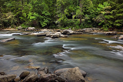 Middle Fork River (ashockenberry) Tags: ashleyhockenberryphotography wild west virginia audra state park middle fork river beautiful scenic landscape flow current rocky shoreline trees forest