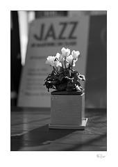 Jazz (radspix) Tags: contax rts 50mm carl zeiss planar t f17 arista edu 100 pmk pyro