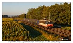 BB25602 IDF - Kogenheim (CC72080) Tags: bb25500 bb25602 sncf kogenheim train omnibus ter alsace grandest rrr rrr236 locomotive lokomotive locomotiva lokomotiva vlak régional personenzug zug treno danseuse