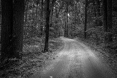 Bend in the Road (mswan777) Tags: road gravel forest tree wood outdoor nature curve plant leaf monochrome black white ansel apple iphone iphoneography mobile stevensville michigan landscape