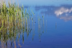 Reeds water sky (Stefano Rugolo) Tags: stefanorugolo pentax k5 pentaxk5 tamronspaf90mmf28dimacro11 kmount ricohimaging reeds water sky reflection abstract